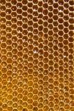 Мед в сотах Стоковые Изображения RF