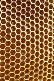 Мед в сотах Стоковые Изображения