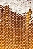 Мед в сотах Стоковое фото RF