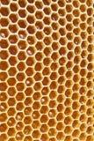 Мед в сотах Стоковое Изображение