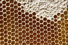 Мед в сотах Стоковая Фотография