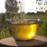 Мед в лучах вечера Солнця Стоковая Фотография