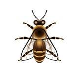мед градиентов пчелы совместимый созданный полный наслаивает названный вектор Стоковое Фото