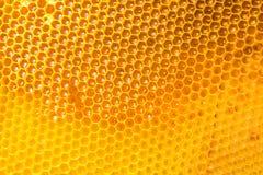 мед гребня свежий Стоковое фото RF