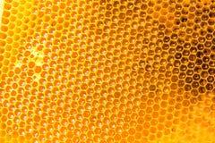 мед гребня свежий Стоковые Изображения RF