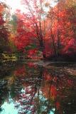 Медленное река осени Стоковое фото RF