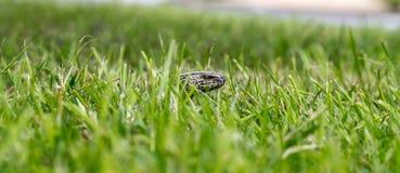 Медленный червь на охоте стоковые изображения rf