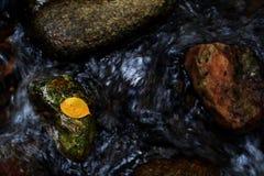 Медленный moving поток в листьях осени Стоковое Фото