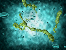 Медицинская иллюстрация ируса Эбола Стоковые Изображения RF