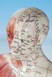 Медицинская модель Стоковое фото RF