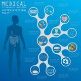 Медицинский и здравоохранение infographic, infog кишечно-желудочного тракта иллюстрация вектора