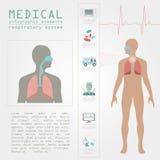 Медицинский и здравоохранение infographic, infograph дыхательной системы бесплатная иллюстрация