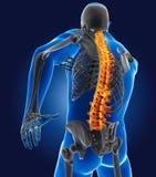 медицинский человек 3D с скелетом Стоковое фото RF