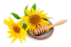 Мед и солнцецвет пчелы Стоковая Фотография