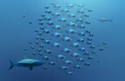 Мелководье рыб и акул Стоковое фото RF