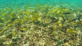 Мелководье тропических рыб подводных видеоматериал