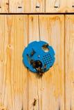 мед крапивницы семьи пчел Стоковая Фотография