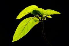 Мелодия лист дерева Стоковая Фотография