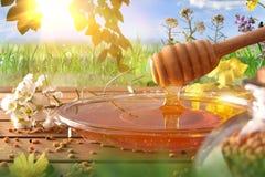 Мед падая в стеклянное блюдо с предпосылкой природы Стоковая Фотография