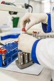 Медсестра аранжирует пробирки с кровью на подносе Стоковое Изображение