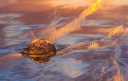 Медуза в заходе солнца Стоковые Изображения RF