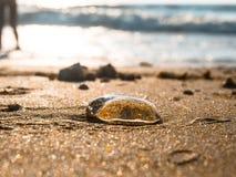 Медуза Стоковые Изображения