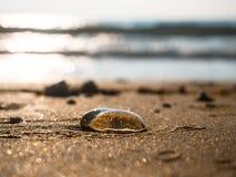 Медуза Стоковая Фотография RF