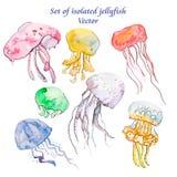 Медузы изолированные на белизне Комплект моря вектор Стоковая Фотография RF
