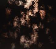 Медузы - студни гребня Mnemiopsis Стоковое фото RF