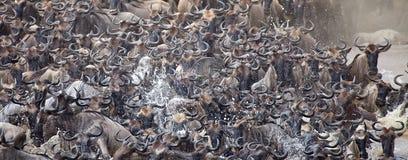 Миграция антилопы гну (taurinus Connochaetes) большая Стоковая Фотография