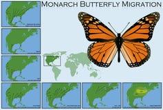 Миграция бабочки монарха Стоковые Изображения