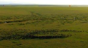 Миграция животного воздушных шаров Стоковые Фото