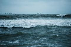 миграция & море стоковая фотография rf