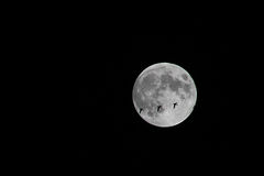 Миграция ночи Стоковое Фото