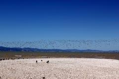Мигрирующая птица Стоковые Фотографии RF
