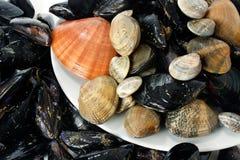 мидии clams Стоковые Фото