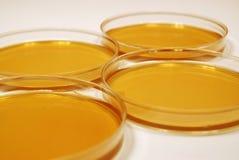Микробиологические плиты роста Стоковые Изображения RF