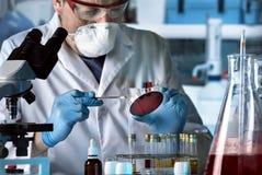 Микробиолог работая с чашка Петри в бактериологически Ла стоковые изображения