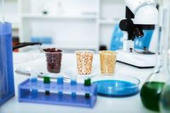 Микробиологическое испытание для качества пищи Стоковая Фотография RF