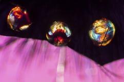 Микрорисунок поляризации частей пчелы путать Стоковые Изображения