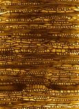 микроскопическая древесина раздела Стоковые Фотографии RF