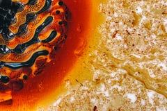 Микроскопическое phot с организмами и абстрактными формами Стоковое Изображение