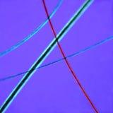 микроскоп волос кота вниз Стоковое Изображение RF
