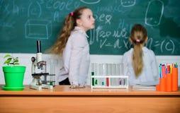 Микроскоп и пробирки на таблице в классе Ребенк около предпосылки доски школы defocused Урок биологии школы стоковые фотографии rf