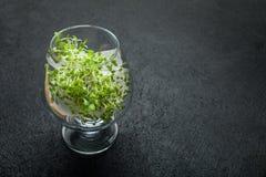 Микро-зеленые цвета в стеклянном кубке Диета и detoxification тела : стоковые фото