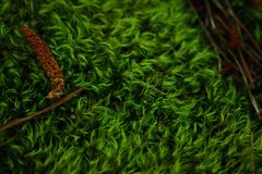 Микро- мох стоковое фото
