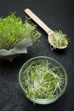 Микро- салат овоща зеленых цветов на черной предпосылке, концепции detoxification, потери веса, стимулирования невосприимчивости стоковое изображение