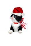 милая белизна котенка Стоковые Изображения