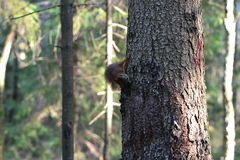 Милая белка сидя на дереве стоковое изображение rf