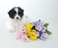 милая весна щенка цветков Стоковое Фото